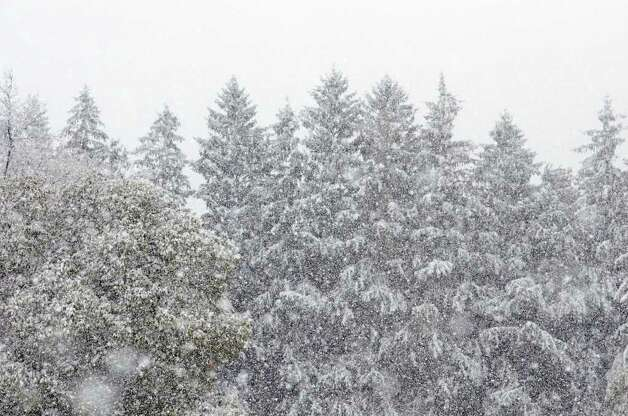 Tree tops are covered with snow during a snow storm in Stamford on Saturday, Oct. 29, 2011. Photo: Amy Mortensen / Connecticut Post Freelance