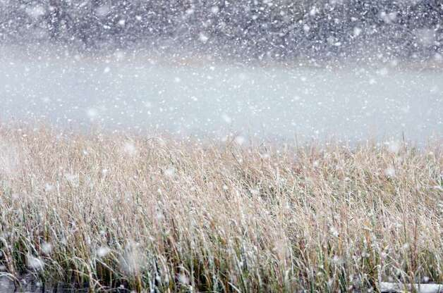 Large snowflakes fall on the water and marsh grass at Cove Island Park during a snow storm in Stamford on Saturday, Oct. 29, 2011. Photo: Amy Mortensen / Connecticut Post Freelance