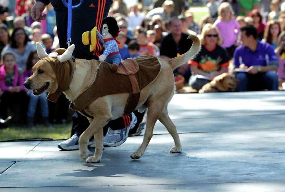 Howl-O-Ween Fest attendees watch Gunner, a labrador retriever, dressed as a bull walk down the runway during a dog costume contest at Oak Meadow Park in the Bridgeland neighborhood Saturday, Oct. 29, 2011, in Cypress. The event included pet vendors, food and events for dogs, with proceeds benefiting local dog rescue groups. Photo: Johnny Hanson, Houston Chronicle / © 2011 Houston Chronicle