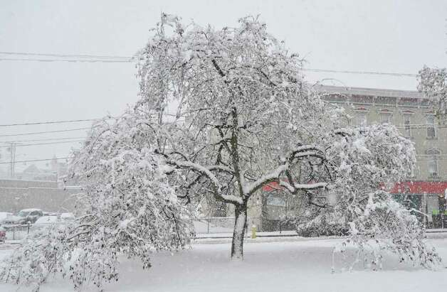 A tree covered in snow in Kennedy Park in Danbury on Saturday, Oct. 29, 2011. Photo: Jason Rearick