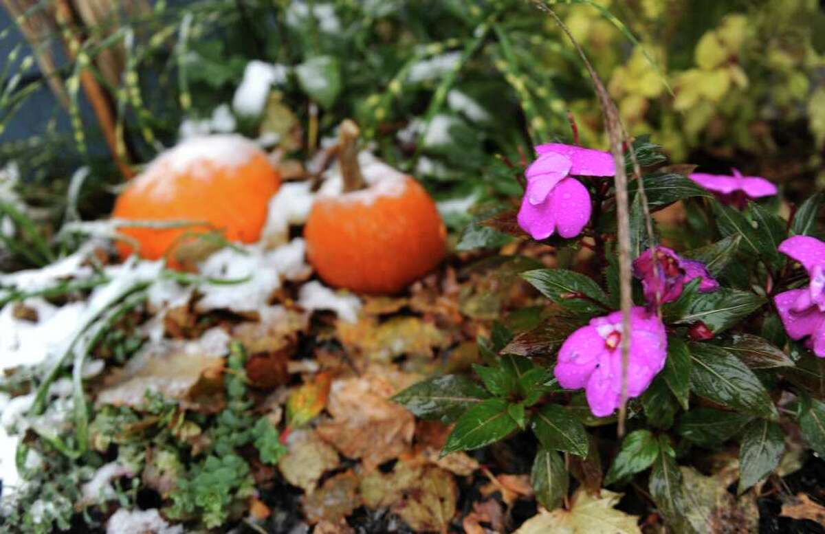 Halloween pumpkins get coated with snow at a home along Depot Street, during a snow storm in Milford, Conn. on Saturday October 29, 2011.