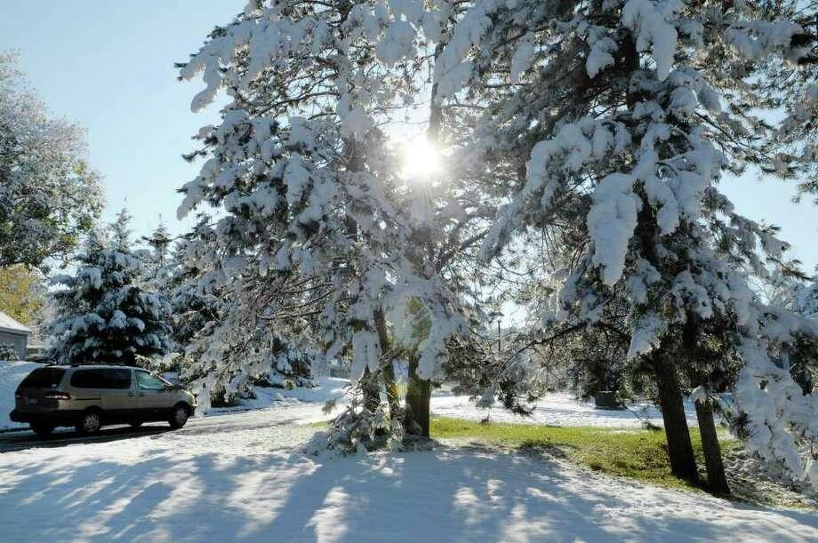 The sun shines through pine trees covered in snow in East Greenbush on Sunday morning, Oct. 30, 2011.  (Paul Buckowski / Times Union) Photo: Paul Buckowski / 00015199A