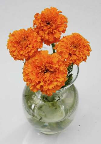 3 Marigolds, a traditional flower placed on graves and altars during Dia de los Muertos. From Fannin Flowers. Shoot from top to show buds only  (AC Studios for the Chronicle)     HOUCHRON CAPTION (10/31/2004-2-STAR) SECNEWS COLORFRONT:  The altars are ready, the sweet bread baking.     HOUCHRON CAPTION (10/31/2004) SECSTAR COLORFRONT:  NONE Photo: Rodolfo Hernandez, Freelance / AC Studios