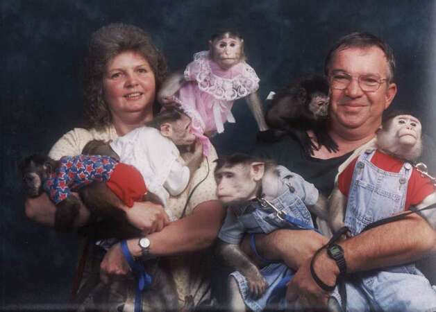These two are considered the Duggars of the monkey world. Photo: Courtesy AwkwardFamilyPhotos.com