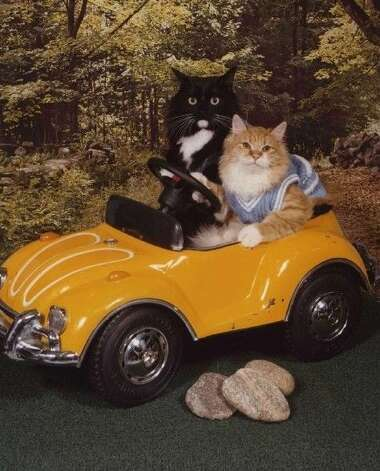 Anything can happen when these two felines hit the open road. Photo: Courtesy AwkwardFamilyPhotos.com