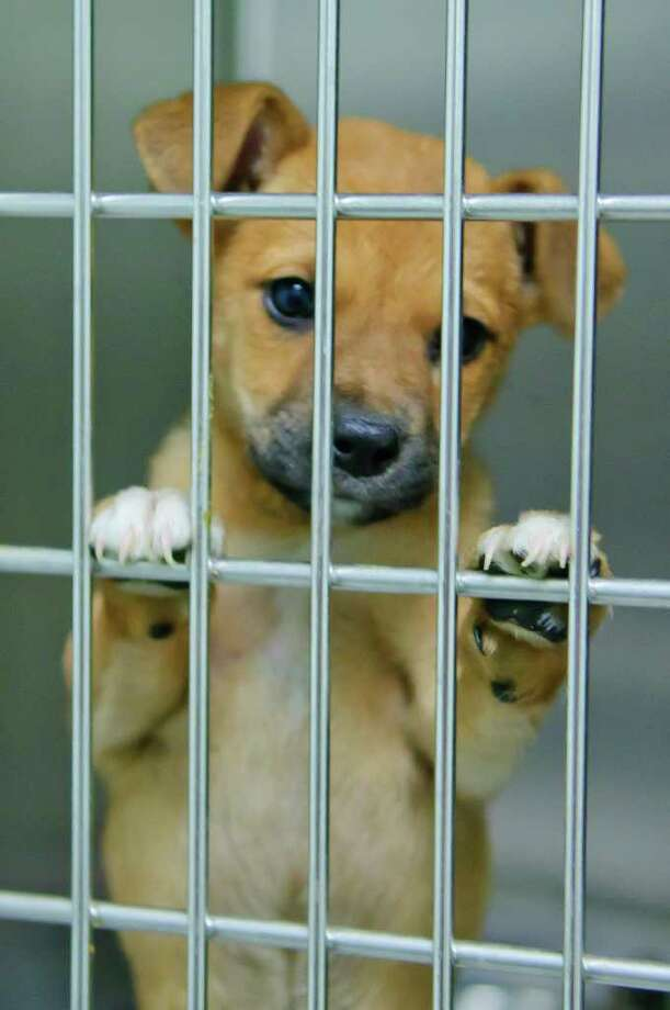 Consider visiting a local animal shelter to look for a good match, before buying a companion animal. Photo: Kim Christensen / Freelance