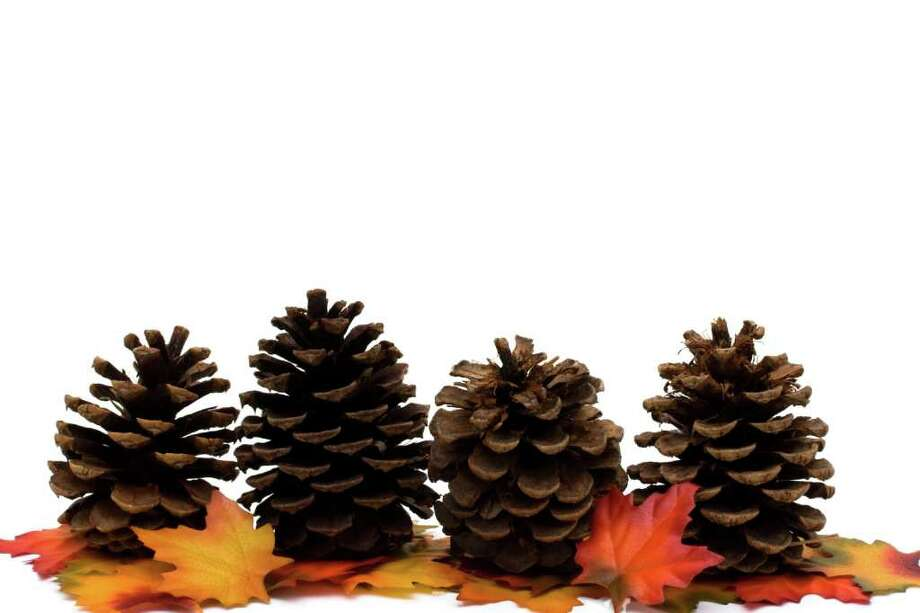 Fall leaves and pinecone isolated on a white background, fall border Photo: Karen Roach / Karen Roach - Fotolia