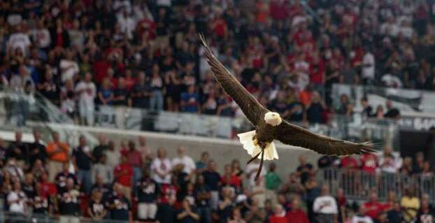 An eagle flies into the stadium before an NFL football game between the Houston Texans and the Cleveland Browns at Reliant Stadium on Sunday, Nov. 6, 2011, in Houston. Photo: Brett Coomer, Houston Chronicle / © 2011  Houston Chronicle