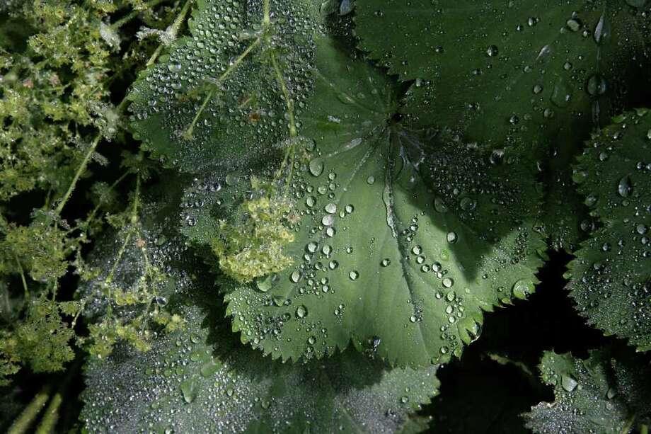 "Ben Larrabee's ""Trudie's Garden."" Photo: Contributed Photo"