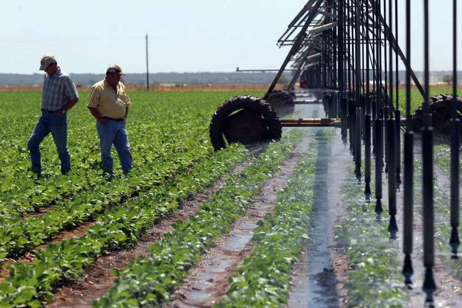 Farmers Bryce Britsch (left) and David Jones (right) look over green beans that are being irrigated by a lateral pivot at Uno Mas Farms in Hondo, Texas Tuesday September 13, 2011. The farm also produces broccoli, squash, sweet corn and cabbage. Lack of rain is affecting farmers' ability to irrigate with restrictions being placed on the Edwards Aquifer. JOHN DAVENPORT/jdavenport@express-news.net Photo: JOHN DAVENPORT, SAN ANTONIO EXPRESS-NEWS / SAN ANTONIO EXPRESS-NEWS (Photo can be sold to the public)