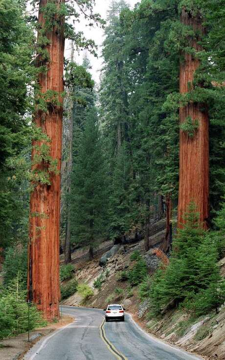 RON COBB : ST. LOUIS POST-DISPATCH  EMISSIONS: Sequoias rise along Generals Highway in California's Sequoia National Park. Plumes of ozone-making gases from the San Joaquin Valley are ruining the air quality. Photo: RON COBB / ST. LOUIS POST-DISPATCH