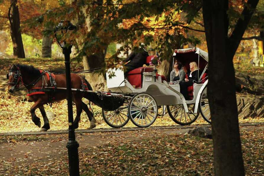 a carriage horse is viewed at central park on november 14 2011 in photo. Black Bedroom Furniture Sets. Home Design Ideas