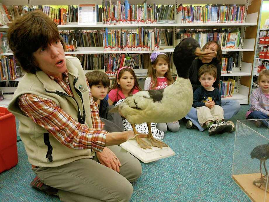 Connecticut Audubon naturalist Colleen Noyes discusses some of the features of the Merganser duck during a Creature Feature program Tuesday at the Fairfield Woods Branch Library. Photo: Mike Lauterborn / Fairfield Citizen contributed