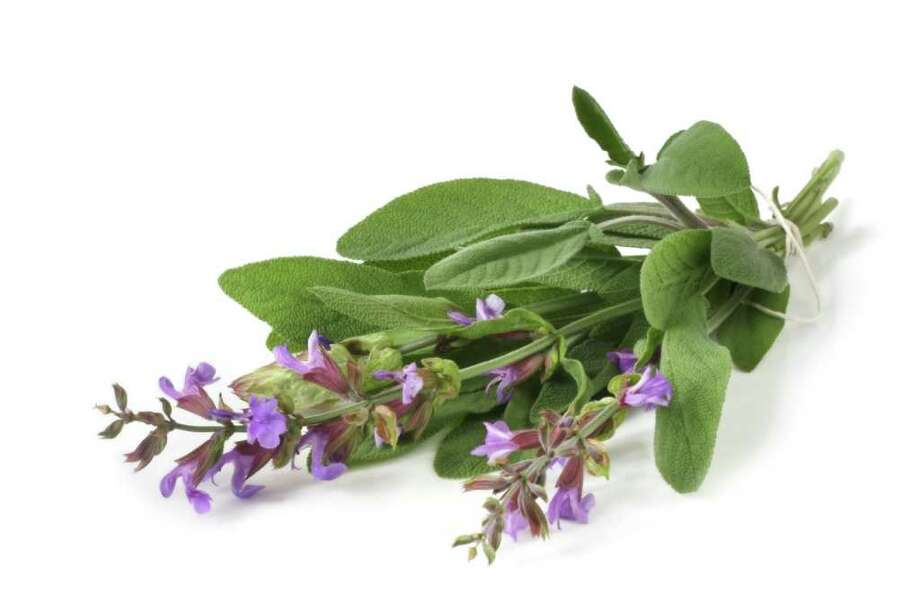 Fresh-picked bunch of flowering sage, casting natural shadow on white. / robynmac - Fotolia