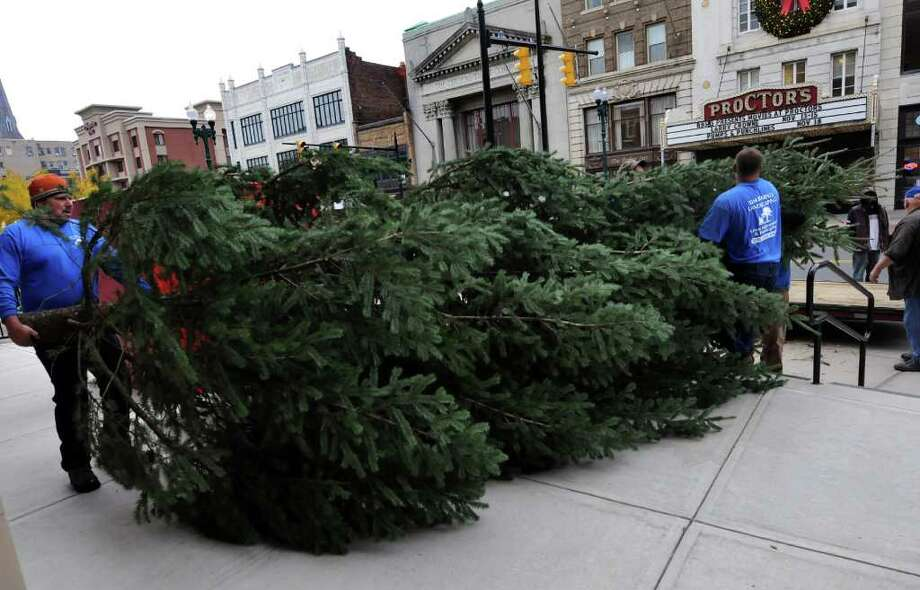 Terry Cantiello, left, helps unload the tree that Tim Barnes Landscaping cut and delivered on Wednesday, Nov. 16, 2011, on State Street in Schenectady, N.Y. This year's tree was donated by Everett and Kathy Whitaker, who live in Schenectady's GE plot. Experience Creative Design will hang lights and decorate the tree Thursday, and the lights will go on at 5 p.m. Saturday to kick off the Holiday Parade. (Cindy Schultz / Times Union) Photo: Cindy Schultz