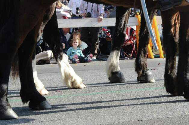 Willow Handley, 3, eyes the horses as the UBS Parade Spectacular welcomed tens of thousands to downtown Stamford Sunday, November 20, 2011. The most welcome guest, though, was the clear skies and temperatures in the low 60s. Photo: Keelin Daly