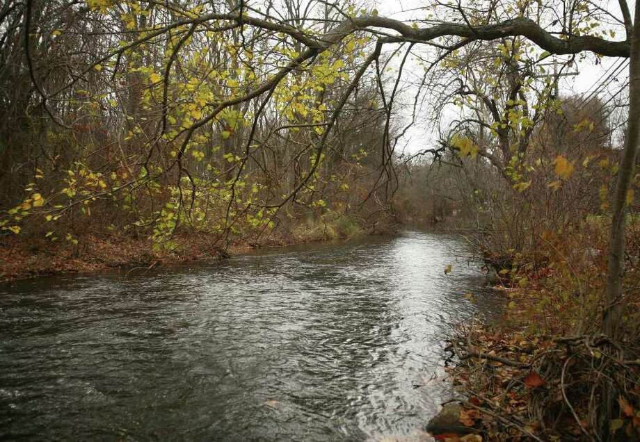 Trees line the Mill River along Brookside Drive in Fairfield. Photo: Brian A. Pounds / Connecticut Post