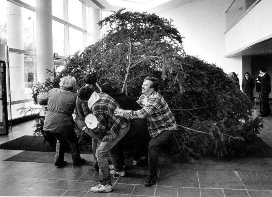 Dec. 2, 1986: The Parks Department tree crew had a time of it getting a christmas tree through the outer doors and across the lobby of the new government center. The 18-foot blue spruce was taken from Eugene Bucur's yard on Shelter Rock Road. Photo: File Photo