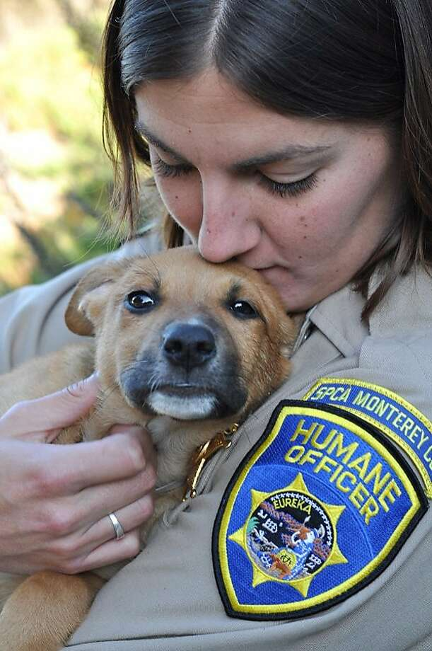 One of six puppies found under a tarp in Monterey County on Wednesday, November 18, 2011. Photo: Monterey County S.P.C.A., Courtesy