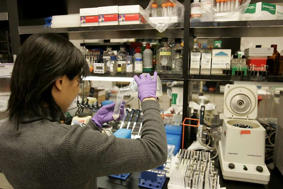Genron Corp in Menlo Park .Thomas Okarma the chife exec of the company in the lab. also Melinda Au working in the lab. STEMCELL_0036_kr.JPG 11/3/04 in Menlo Park,CA. KURT ROGERS/THE CHRONICLE  Ran on: 11-04-2004 Melinda Au works in the lab facilities at Geron in Menlo Park. Photo: Kurt Rogers, SFC