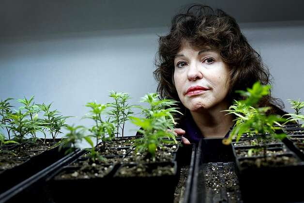 Lynnette Shaw (cq) runs the Marin Alliance for Medical Marijuana in Fairfax, Calif., Friday, November 11, 2011.  She said she voted for Obama but now he's turned his back on the industry, and she is fighting federal efforts to close her business.  She is photographed with some of the organic clones at the shop, the cannabis sativa strain called train wreck, which she says is good for glaucoma and nausea.   Ran on: 11-14-2011 Lynnette Shaw, who runs the 14-year-old Fairfax dispensary, has been threatened with eviction by federal authorities. Photo: Sarah Rice, Special To The Chronicle