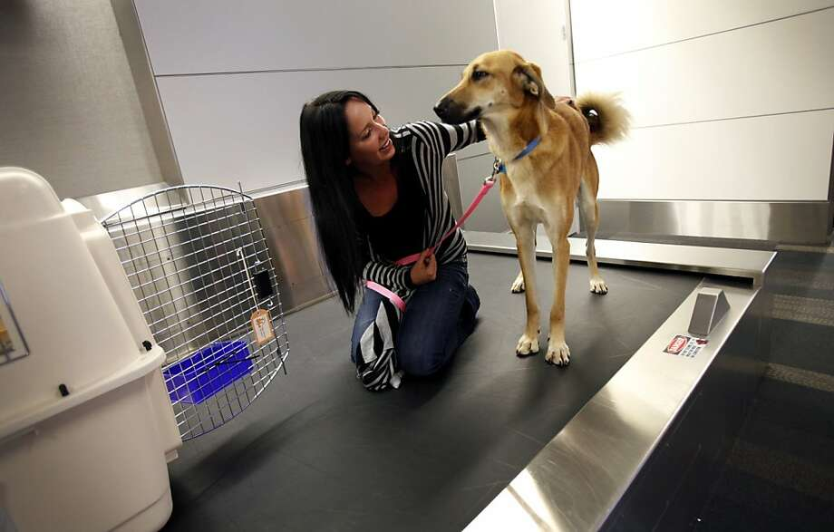 Christmas Collins lets Chloe out of her crate at baggage claim at San Francisco International Airport in San Francisco, Calif., Thursday, November 17, 2011.  The dog traveled all the way from Afghanistan to be reunited with Colllins' brother, Marine Corporal Ward Van Alstine, who befriended the stray while on tour in Afghanistan.  He will be reunited with Chloe on Thanksgiving in Santa Barbara, near where he is currently stationed at Camp Pendleton. Photo: Sarah Rice, Special To The Chronicle