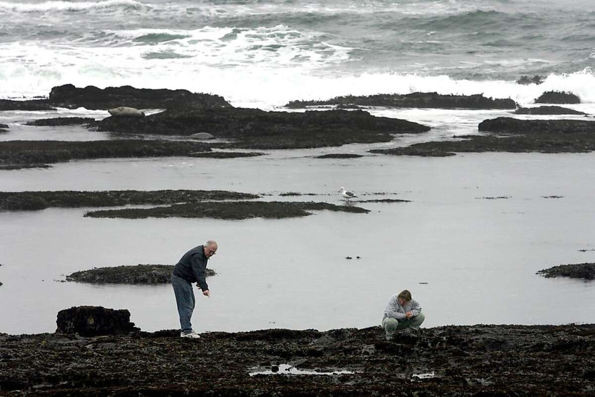 Visitors inspect marine life at the Fitzgerald Marine Reserve in Moss Beach, Calif. on Wednesday, November 26 2008. Ran on: 12-18-2008 Visitors take a closer look at marine life in the plentiful tide pools at the Fitzgerald Marine Reserve in Moss Beach.
