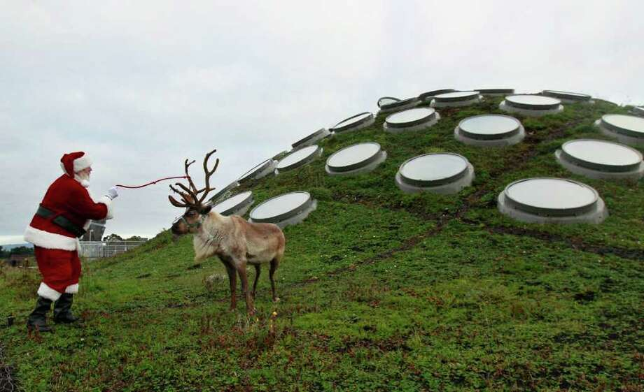Entomologist Dave Kavanaugh, dressed as Santa Claus, holds onto Miles, a male reindeer, as they pose for reporters on the Living Roof at the California Academy of Sciences in San Francisco. The reindeer will be a part of the Academy's holiday program that will be exhibited until January 16, 2012. The Living Roof Project is an ongoing citizen science program designed to give community members an opportunity to learn about the Academy's unique roof ecosystem while contributing to important baseline data regarding the many plants, birds, and arthropods that inhabit and utilize the Living Roof's 2.5 acres of green space. Photo: Jeff Chiu, Associated Press / AP