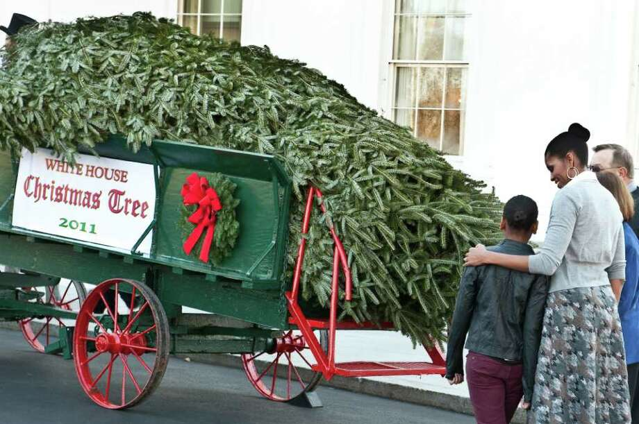 NICHOLAS KAMM : AFP/GETTY IMAGES IT'S HERE: First Lady Michelle Obama and daughter Sasha admire the 19-foot balsam fir that will be the White House Christmas tree this year. The 18-year-old tree came from Wisconsin. Photo: NICHOLAS KAMM / AFP
