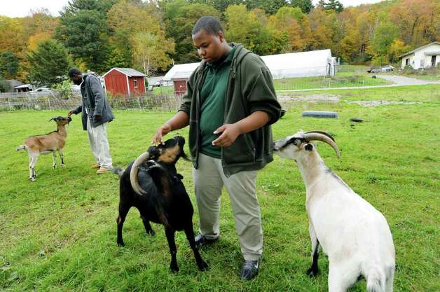 Khalid Cooper, 17, right, and Ahsan Guy, 19, greet the resident goats on Wednesday, Oct. 12, 2011, at Berkshire Farm in Canaan, N.Y Khalid takes care of the goats and other farm animals as part of his chores. (Cindy Schultz / Times Union) Photo: Cindy Schultz / 00014950A