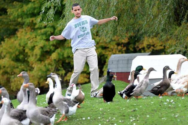 McKenna Fay, 18, chases the resident geese on Wednesday, Oct. 12, 2011, at Berkshire Farm in Canaan, N.Y. (Cindy Schultz / Times Union) Photo: Cindy Schultz / 00014950A