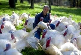 Tim Diestel holds a 40lb turkey on his farm, Diestel Family Turkey Ranch in Sonora CA,