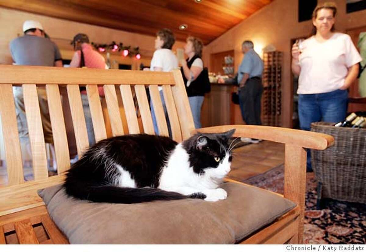 TASTINGROOMS_SANTACRUZ_022_RAD.jpg SHOWN: Thomas Fogarty Winery and Vineyard at 19501 Skyline Bl. in Woodside. Morty the cat rules the tasting room. These pictures were made in Woodside, CA. on Sunday March 18, 2007. (Katy Raddatz/The Chronicle) **Thomas Fogarty, Morty the cat Mandatory credit for the photographer and the San Francisco Chronicle. No sales; mags out.