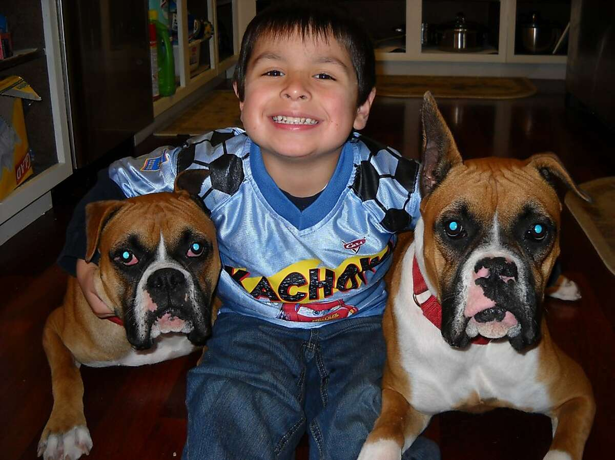 The Torres family's boxers Jordan, left, and Bella, with 6-year-old Diego Torres. San Mateo police shot the dogs to death Sept. 26, 2011, when they got out of their yard and allegedly threatened children in a nearby park.