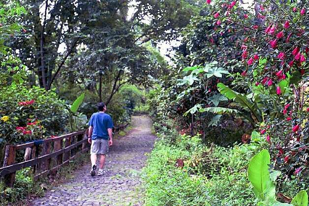 TRAVEL MEXICO -- Fred on path in Barranca de CupatitzioNational Park, with tropical vegetation following banks of Rio Cupatitzio, a kilometer from Uruapan's central plaza and adjacent to the Mansion del Cupatitzio hotel.  Christine Delsol / Special to SFGate Photo: Christine Delsol, Special To SFGate