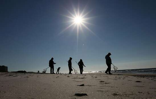 Cleanup crews search for oily tar balls along the beach in Gulf Shores, Ala., Wednesday, Sept. 7, 2011.  City officials believe the tar balls are from last year's BP oil spill, and they were dredged up from the bottom by Tropical Storm Lee.   (AP Photo/Dave Martin) Photo: Dave Martin, AP