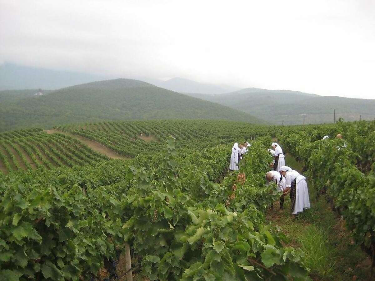 Workers pick grapes in the vineyards at Kir-Yianni winery in the Macedonia wine region of Northern Greece.