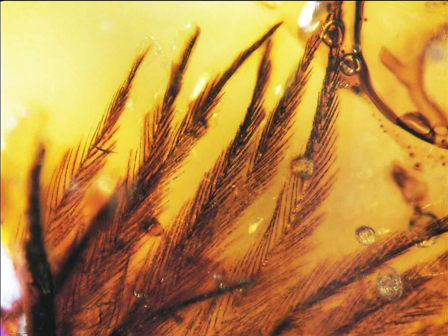Overview of 16 clumped feather barbs in Canadian Late Cretaceous amber, specimen TMP 96.9.553/ Photo: Science/AAAS