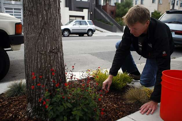 Steve Carlson cleans up the leaves from his sidewalk garden on Tuesday, August 9, 2011. The neighborhood on 17th Avenue got together with the San Francisco Department of Public works to tear up large sections of sidewalk and install attractive gardens. It's part of the city's grey to green project which beautifies treeless neighborhoods while increating permeable surfaces in the city. Photo: Maddie McGarvey, The Chronicle