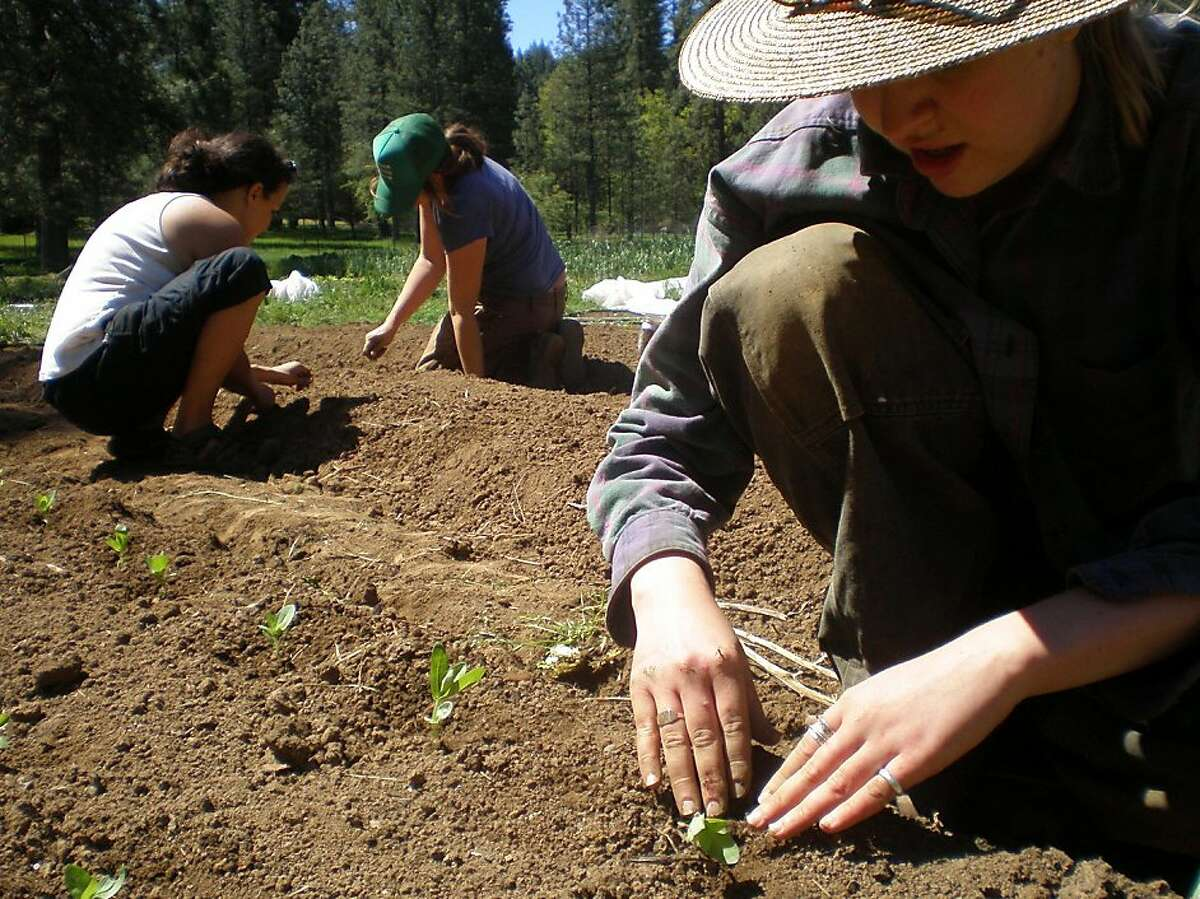 Northern California's Nevada City. Workers plant vegetables as part of Soil Sisters, a collective support group for others like them.