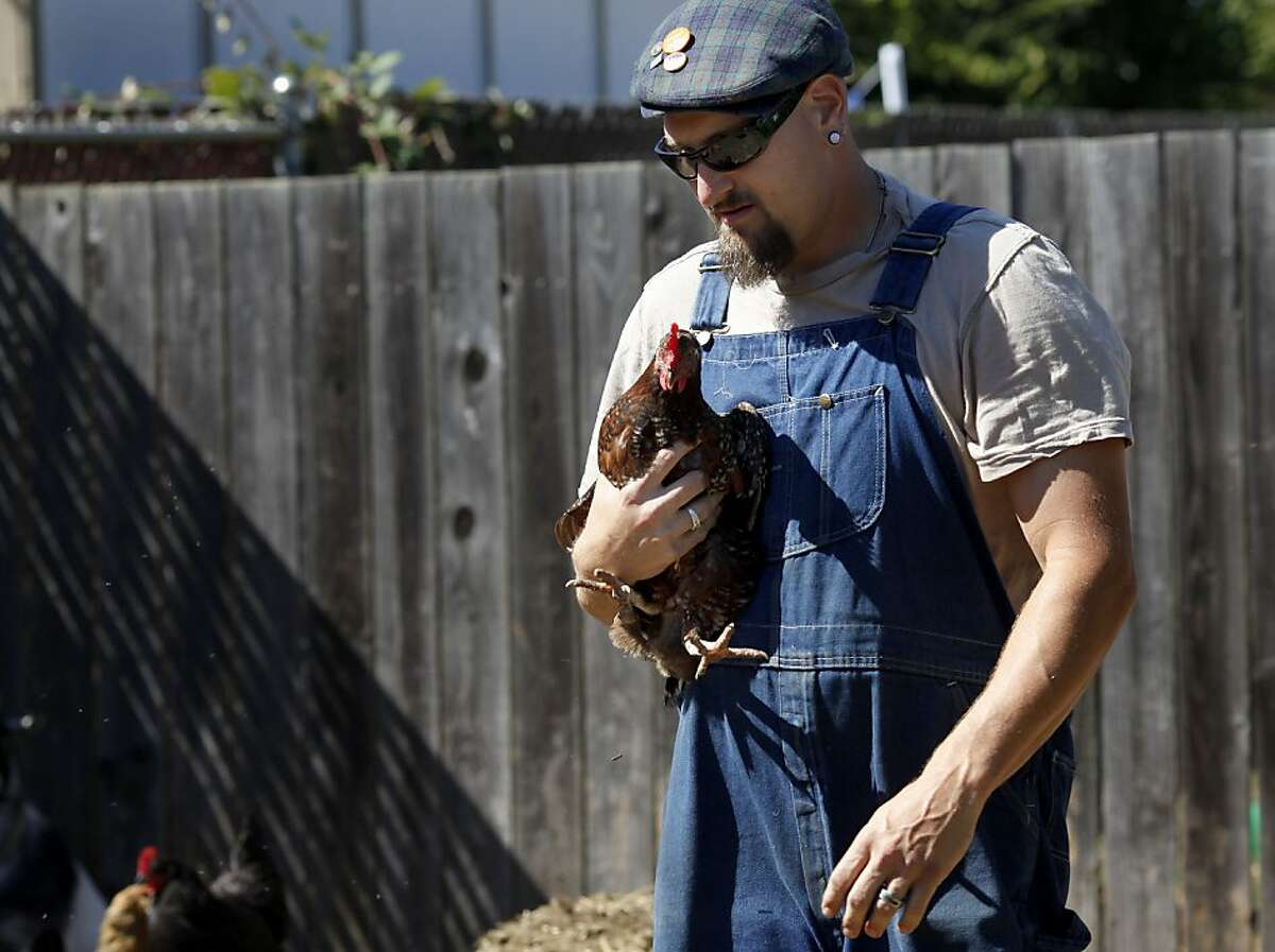 Tom Ferguson walks through the garden with one of the chickens they raise for eggs. Rachel Hoff and Tom Ferguson are going a year without buying groceries, eating only what they grow in their backyard in Vallejo, Calif. or trade with other farmers.