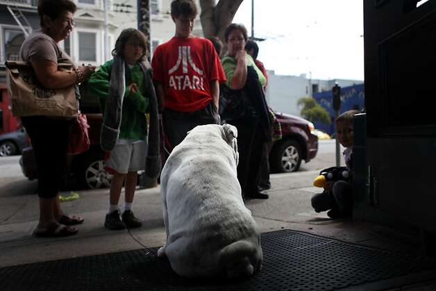 Haight Street tourists stop to gaze at Jake the bulldog as he sits in his usual spot outside Bladerunners Hair Studio. Photo: Mike Kepka, The Chronicle