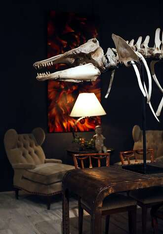 A skeleton of a baby orca is for display only at Coup d'Etat in San Francisco, Calif., August 4, 2011. Photo: Sarah Rice, Special To The Chronicle