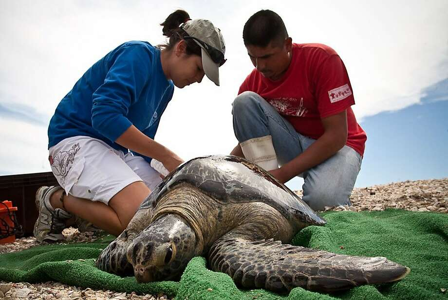 - Photo: SEE Turtles, RED Sustainable Travel