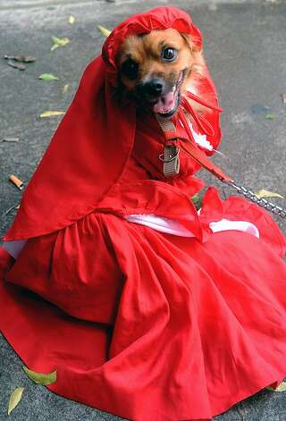 Little Red Riding Hood or Cardinal Wolsey? Photo: Afp, AFP/Getty Images