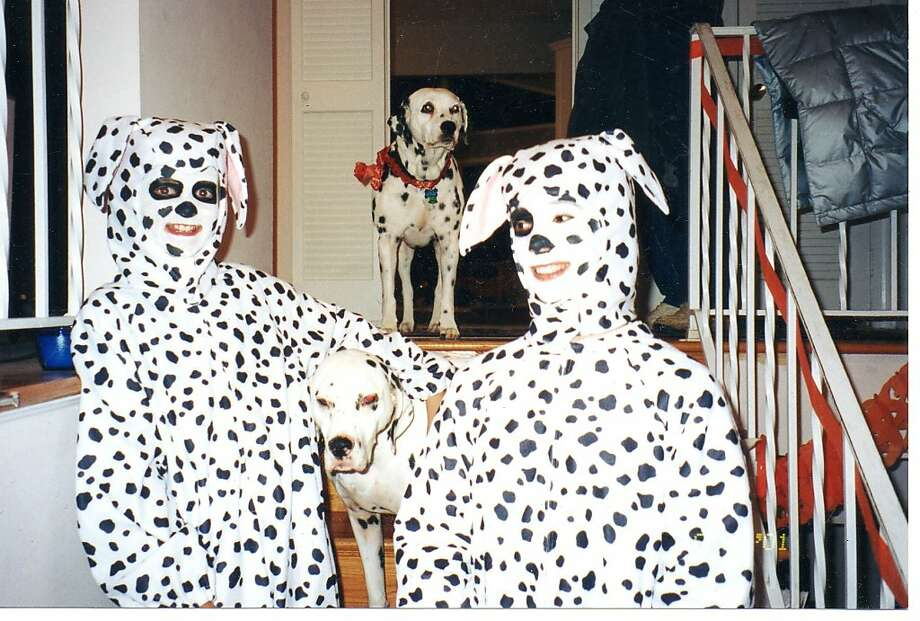 Spots! Can you spot the real dog?