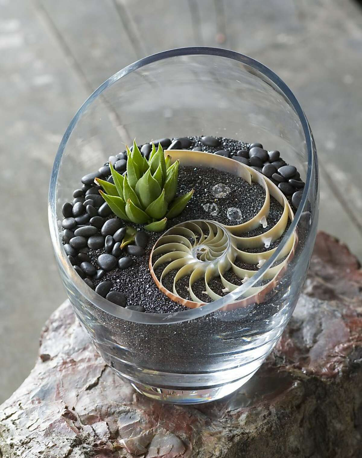 Cut glass vase with nautilus shell on hematite sand and black river rocks. From