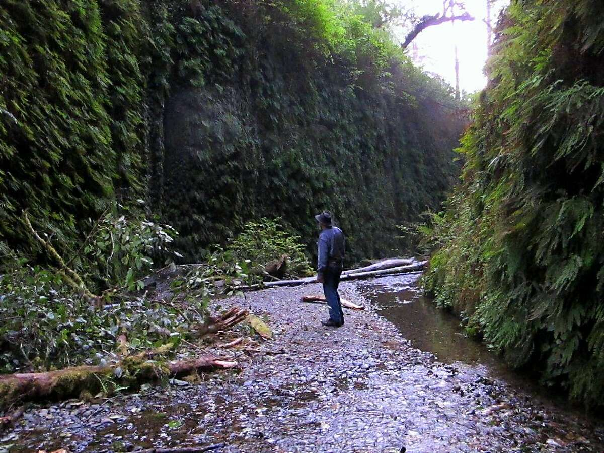 TS (you can't really tell it's me) at dusk in Fern Canyon at Prairie Creek Redwoods State Park. Photo: Michael Furniss