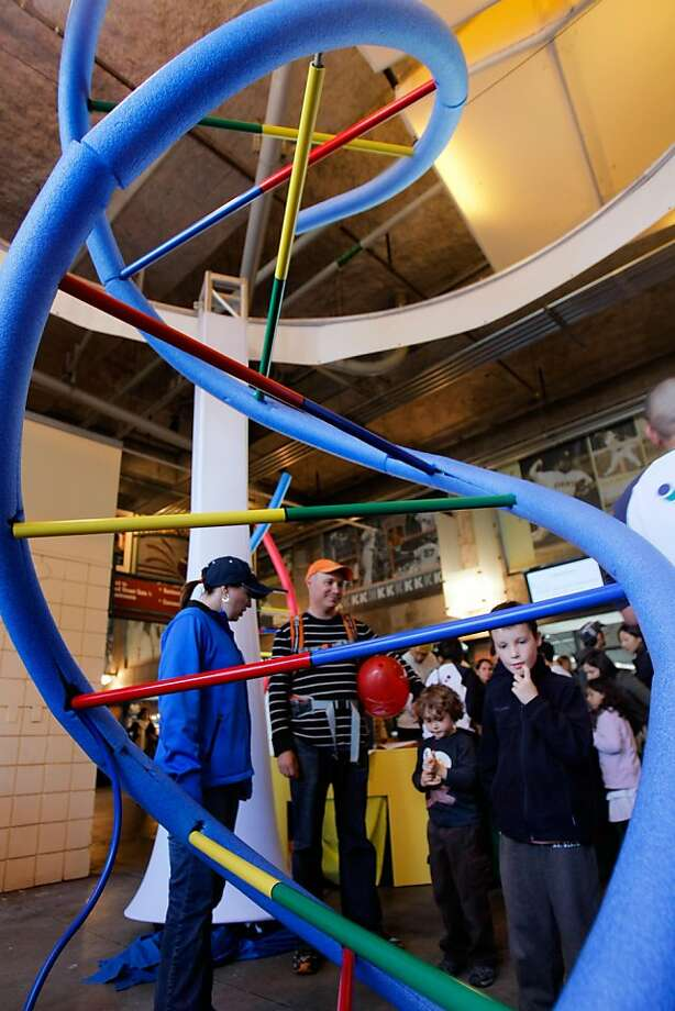 Miles Iwanchuk (right) his brother Graham (center) and their dad check out a 12-ft DNA helix at the Bay Area Science Festival at AT&T Park in San Francisco, Calif., on Sunday, Nov. 6, 2011. Photo: Thomas Webb, The Chronicle