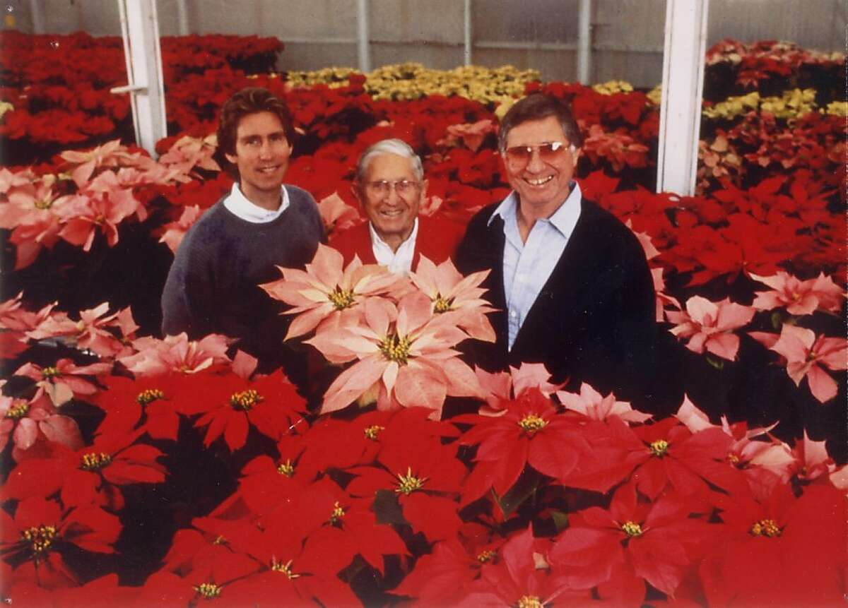 From left, Poinsettia moguls Paul Ecke III, Paul Ecke Sr., and Paul Ecke Jr. show off some of their spectacular holiday wares.